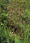 Bentwood Trellis by Bonnie Gale